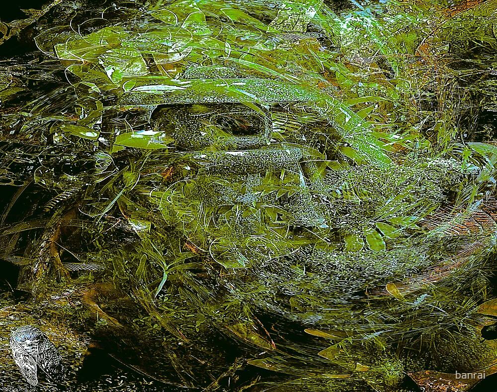 forest depths..... a slight aura by banrai