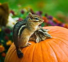 Chipmunk Sitting on Pumpkin by Timothy Borkowski