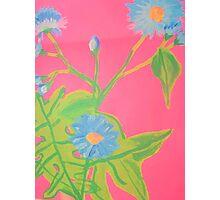 Chicory Photographic Print