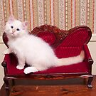 White Flamepoint Ragdoll Kitten on Queen Anne Sofa by DariaGrippo