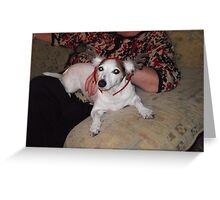 jack russel with raindeer ears on Greeting Card