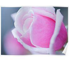Rose Pink Poster