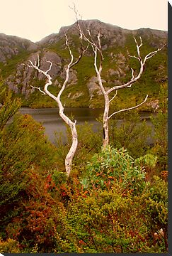 Skeletal trees on Crater Lake by Michael Matthews