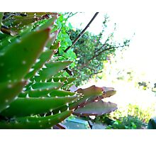 a plants life Photographic Print