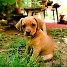 Master of Puppy Eyes by SunriseBirds