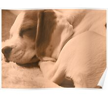 Peaceful Sleeping Beagle Puppy (Sepia) Poster