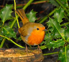 Little Robin Red Breast by kelly-m-wall