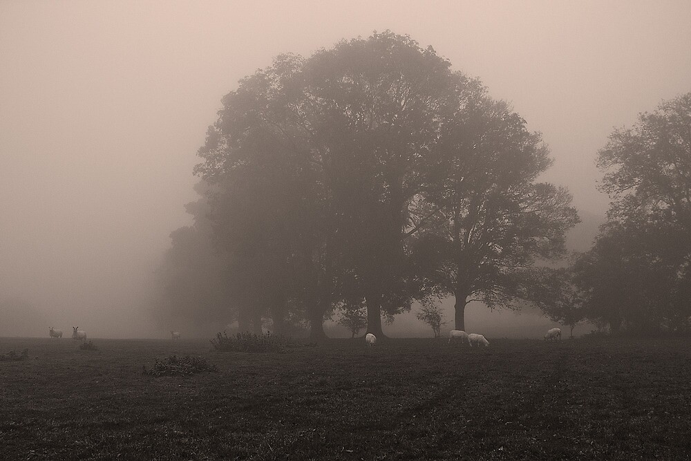 The Hidden Tree line by Billy Hodgkins