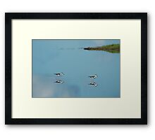 Black Necked Stilts - MINWR Framed Print