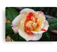 Rose of Beauty Canvas Print