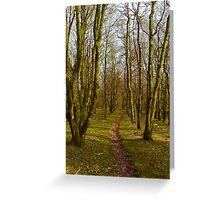 Woodland path, Dartmoor National Park Greeting Card