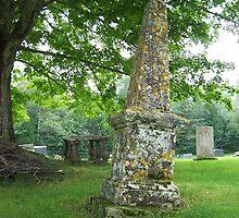 Lichen Covered Stone by Martha Medford