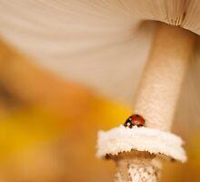 ladybug on a mushroom by Pavel Maximov