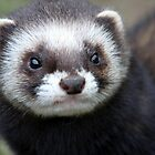 Polecat Portrait by Christopher Lloyd