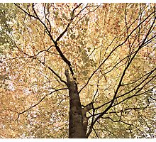 The Canopy Photographic Print