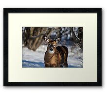 Hi There do you have a carrot? Framed Print