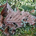 New Year Frost, 1 by Alice Schuerman