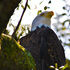 Symbol Of Pride by Bill Colman