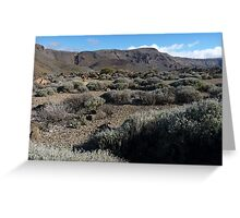 Desert at 7,000 feet Greeting Card