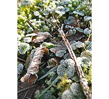 New Year Frost, 5 Photographic Print