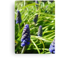 Bluebell Buds Canvas Print