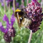 Busy Bumble Bee by BlueEyePictures