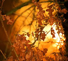 Autumn Leaves by CPProPhoto
