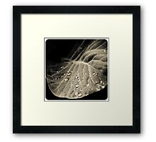 Leaf with water drops Framed Print