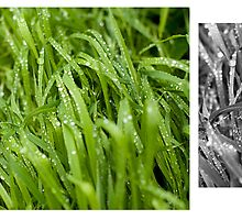 Water drops on the green grass by Anton Belovodchenko