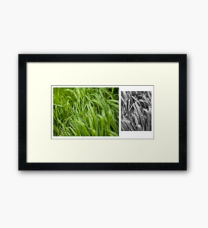 Water drops on the green grass Framed Print