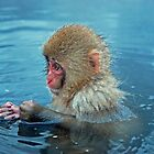 Snow monkey in hot springs by Istvan Hernadi
