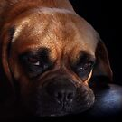 Puggle Dog by Johnny Furlotte
