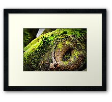 Tree's Mouth Framed Print