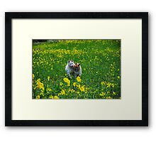 Happy Field Framed Print