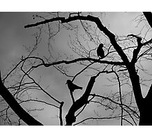 Birds of Carrion Photographic Print