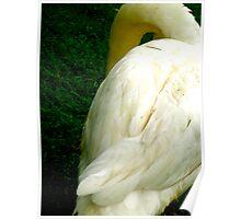 Swan, Lake Bled, Slovenia Poster