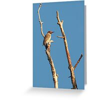 Northern Flicker ~ Greeting Card
