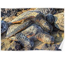 Sea Turtles at Rest Poster