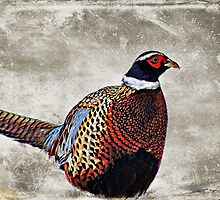 Winter Pheasant by smalletphotos