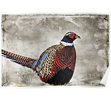 Winter Pheasant Poster