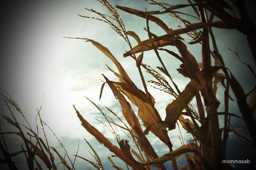 Sunlight on the Corn by mommasab