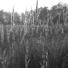 Close up of Grass by PMJCards