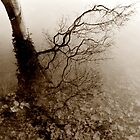 Tree Reflections on Sepia by Xoanxo