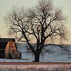 Barn At Sunrise by RenieRutten