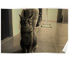 Cranky Cat Poster