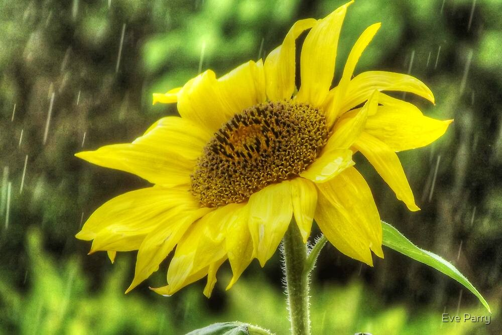 Sunflower In The Rain by Eve Parry