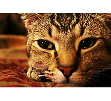 Cat close up Photographic Print