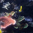 Underwater 2 by Valeria Lee