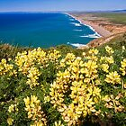 Shoreline with Yellow Wildflowers by George Oze