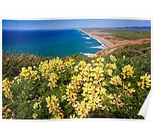 Shoreline with Yellow Wildflowers Poster